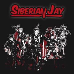 Siberian Jay: Not So Easy