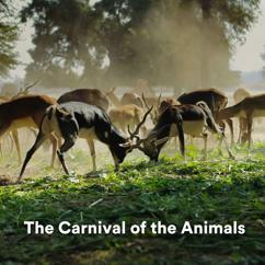 Exam Study Classical Music Orchestra, All Stars Symphonic Orchestra & Brain Power Amadeus: The Carnival of the Animals