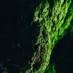 Nicolai Kersting: Evolving Core