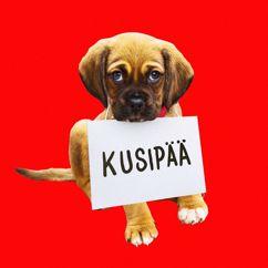 Roope Salminen & Koirat: Kusipää