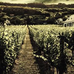 Art Lounge: Winery Road