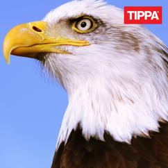 TIPPA: Satutat mua