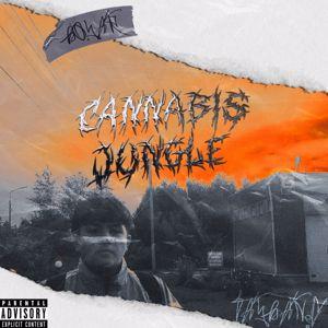 tay bang: Cannabis Jungle