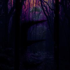 The Magic Box: A Dark Mind