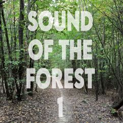 Nature Sound Boy: Sound of the Forest 1