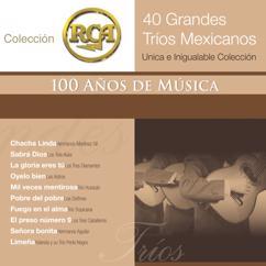 Various Artists: RCA 100 Anos De Musica - Segunda Parte (40 Diferentes Grandes Trios - Unica E Inigualable Coleccion)