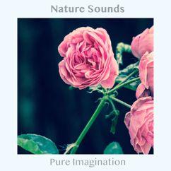 Nature Sounds: Pure Imagination
